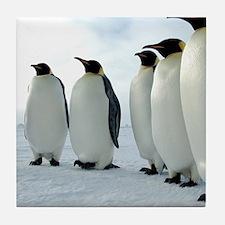 Lined up Emperor Penguins Tile Coaster