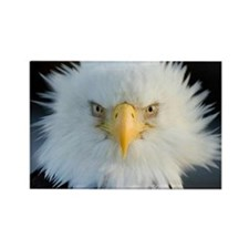 Cute Eagle Rectangle Magnet (100 pack)