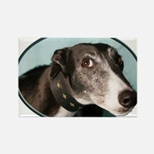 Guilty Greyhound in Oval Magnets