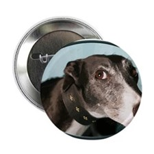 """Guilty Greyhound in Oval 2.25"""" Button (10 pack)"""