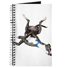 Cockroaching Greyhound Journal