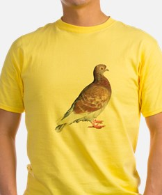 Red Pigeon (Isolated) T
