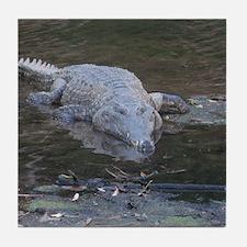 Crocodile in the wild Tile Coaster