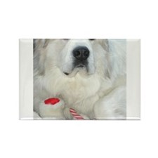 great pyrenees with teddy bear Magnets