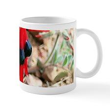 Sturt's Desert Pea Wildflowers Mugs