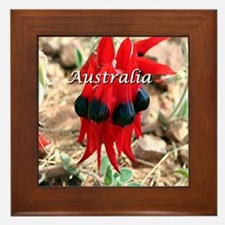 Sturt's Desert Pea, Australia (caption Framed Tile