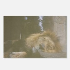 Sleeping Lion Postcards (Package of 8)