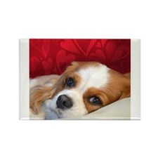 Funny Black and tan cavalier king charles Rectangle Magnet