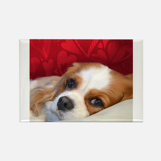 Cute King charles cavalier spaniel Rectangle Magnet