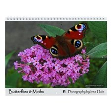 Butterflies And Moths Wall Calendar