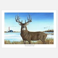 Cute Whitetail deer Wall Art