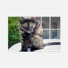 callie the cat Rectangle Magnet