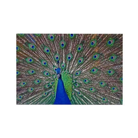 Peacock 1512 Rectangle Magnet
