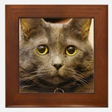 Cute Russian blue cat Framed Tile