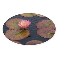 monetesque water lily Decal