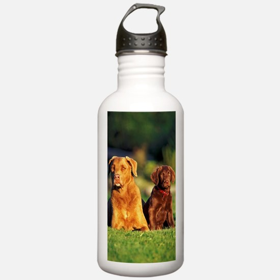 Chesapeake Bay Retriev Sports Water Bottle