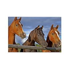 Three Horse Foals Magnets