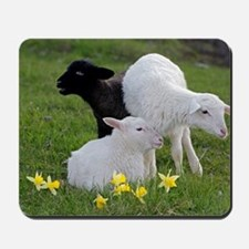 Three Baby Sheep Mousepad