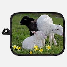 Three Baby Sheep Potholder