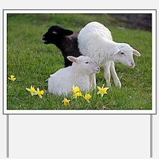Three Baby Sheep Yard Sign