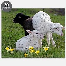 Three Baby Sheep Puzzle