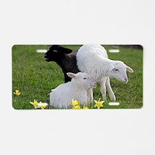 Three Baby Sheep Aluminum License Plate