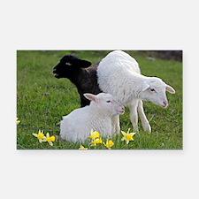 Three Baby Sheep Rectangle Car Magnet