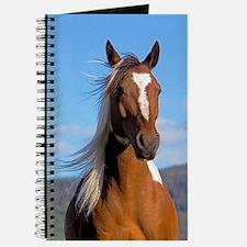 Pinto Arabian portrait Journal