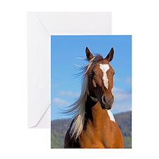Pinto Arabian portrait Greeting Cards