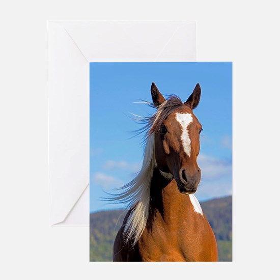 Pinto Arabian portrait Greeting Cards