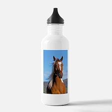 Pinto Arabian portrait Water Bottle