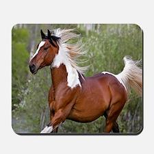 Pinto Horse 2 Mousepad