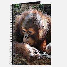 amazing Animal Orang Baby Journal