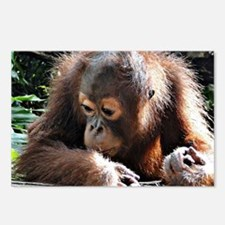 amazing Animal Orang Baby Postcards (Package of 8)