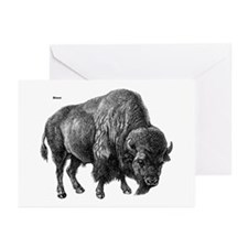 Bison Greeting Cards (Pk of 10)