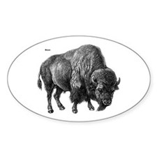 Bison Oval Decal