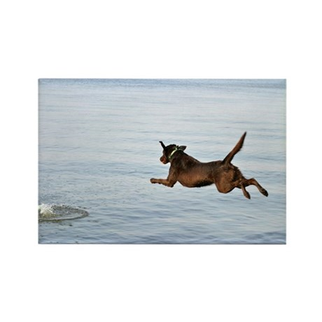 Chocolate Lab Remi Rectangle Magnet