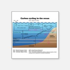 Ocean carbon cycle Sticker