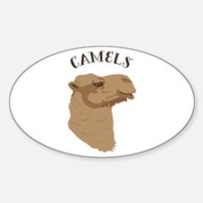 Camels Decal