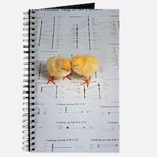 Chicks Journal
