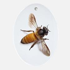 Cute Honey Oval Ornament