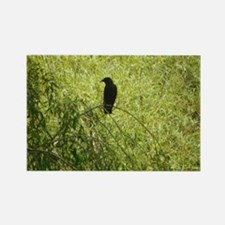 Crow 1 Rectangle Magnet