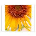 Sunflower Posters
