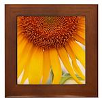 Sunflower Framed Tile