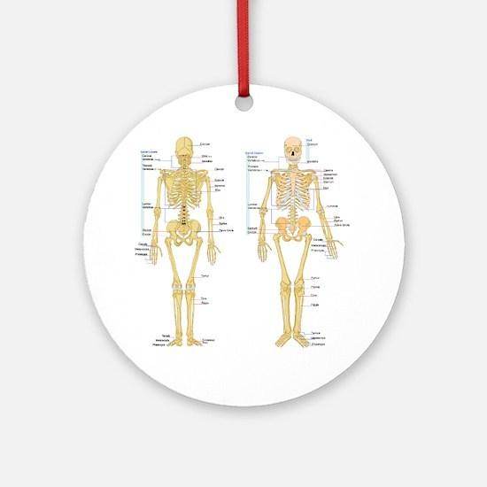 Funny Anatomy Round Ornament
