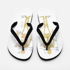 Funny Medical Flip Flops