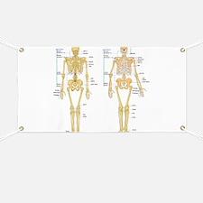 Funny Anatomy Banner