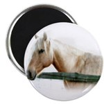 Horse Photography Magnets