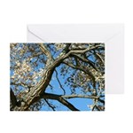 Cottonwood Greeting Cards (6)