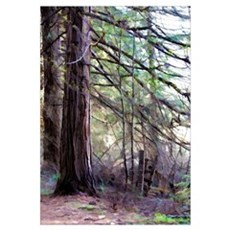 Forest Fence Canvas Art